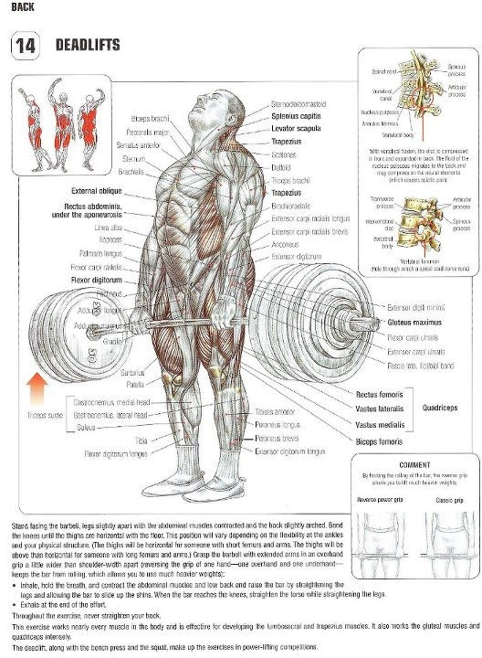 Strength Training Anatomy 2nd Edition – www.europeanpharmacyonline.com